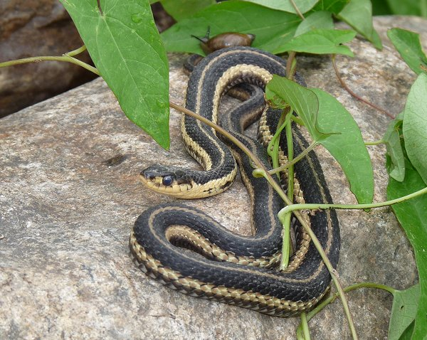 A Story From My Brother About The Danger of Garden Snakes – What ...