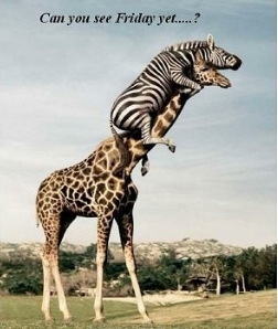 Your friday animal laughs via google what about god - Funny animal pictures with words ...