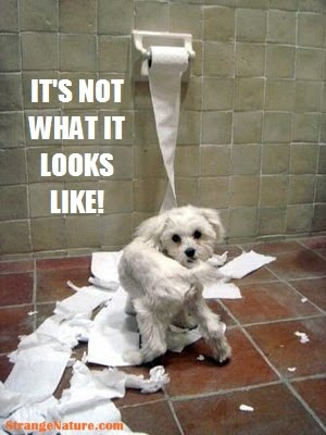 Your tuesday morning animal laughs via google what about - Funny animal pictures with words ...