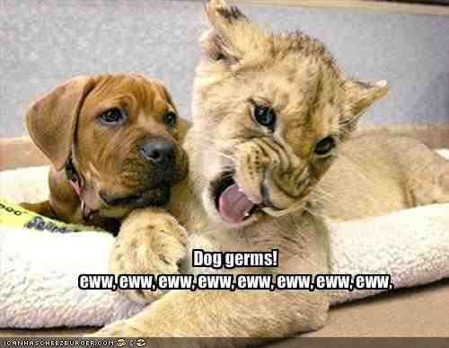 Your Tuesday Morning Animal Laughs Via Google – What about ...