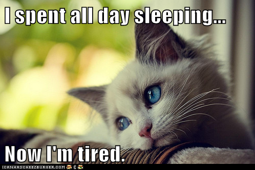 https://terri0729.files.wordpress.com/2012/03/funny-pictures-animal-memes-first-world-cat-problems-sleep-the-pain-away.png