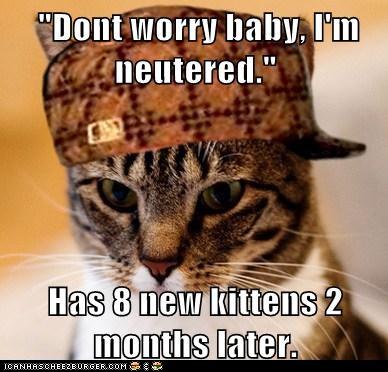 Mother Cat Wont Feed A Kitten