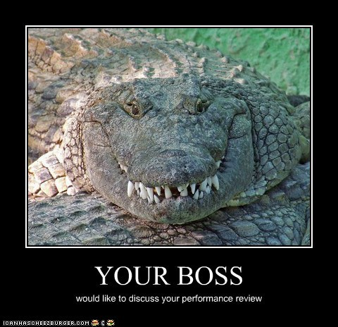 funny-animal-captions-animal-capshunz-your-boss