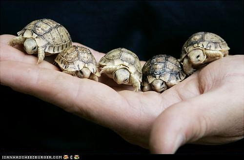 Your wednesday icanhascheezburger laughs what about god - Cute turtle pics ...