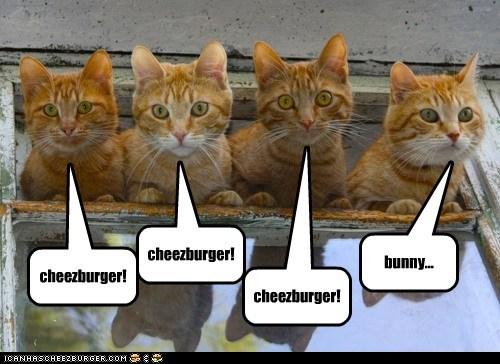 Icanhascheezburger Cat Videos